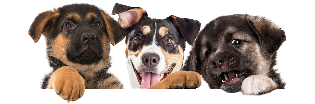 Best Dog Daycare in West Los Angeles